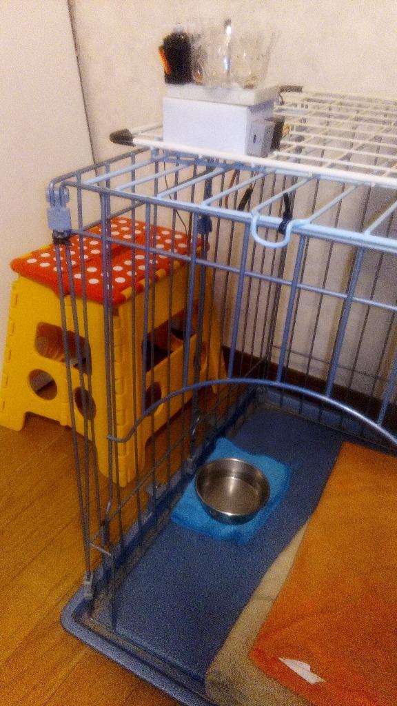 ワンちゃん喜ぶパブロフ式自動餌やり装置