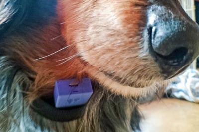 愛犬用に簡易体温管理システムを作ってみた